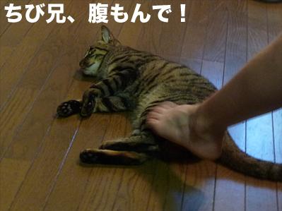 俺をかまえ!
